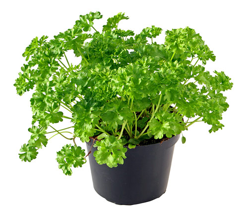 Keep Your Heart and Skin Healthy with Parsley