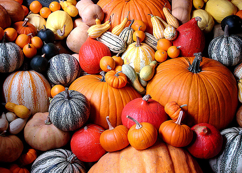 Boost Immunity and Reduce Inflammation with Pumpkins