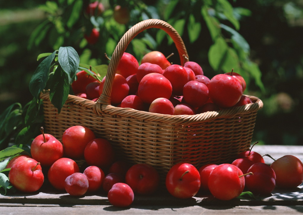 Eat Cherry Plums And Lose Weight