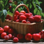 Eat Cherry Plums And Lose Weight Top Natural Remedies