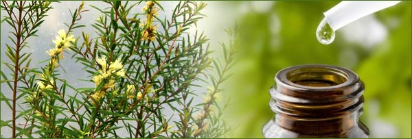 10 Essential Oils To Keep At Hand