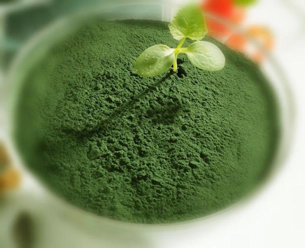 9 avantages impressionnants pour la santé de la chlorella