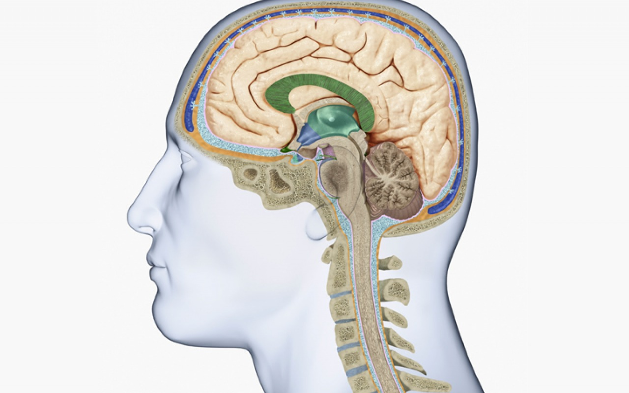 Natural Remedies For Your Brain