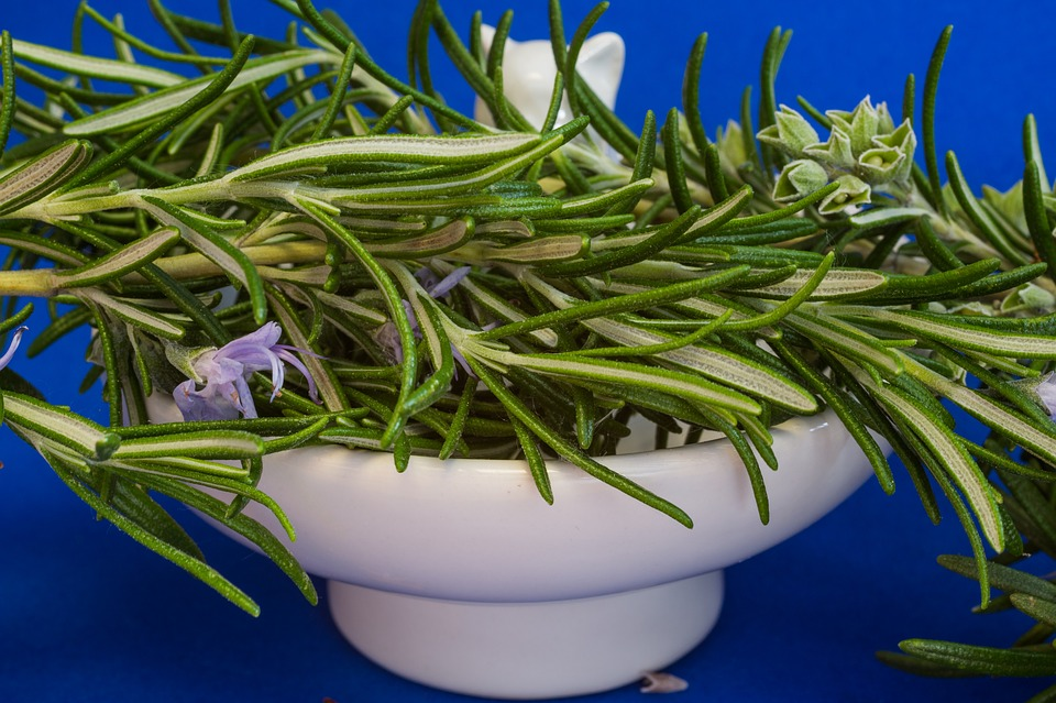 rosemary for head colds